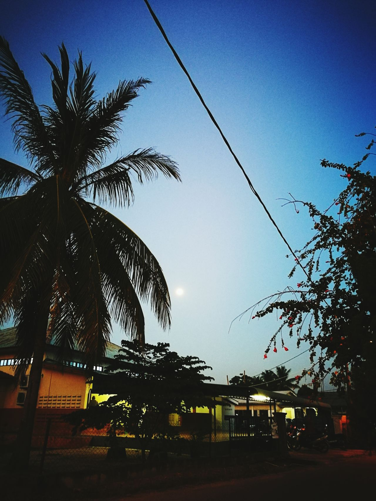Nature Sky Tree Day Outdoors Branch Beauty In Nature No People Low Angle View Backgrounds High Angle View Maghrib MaghribPrayer Maghrib Time Evening Prayer Full Moon 🌕 Full Moon Night  Full Moon Coconut Coconut Tree
