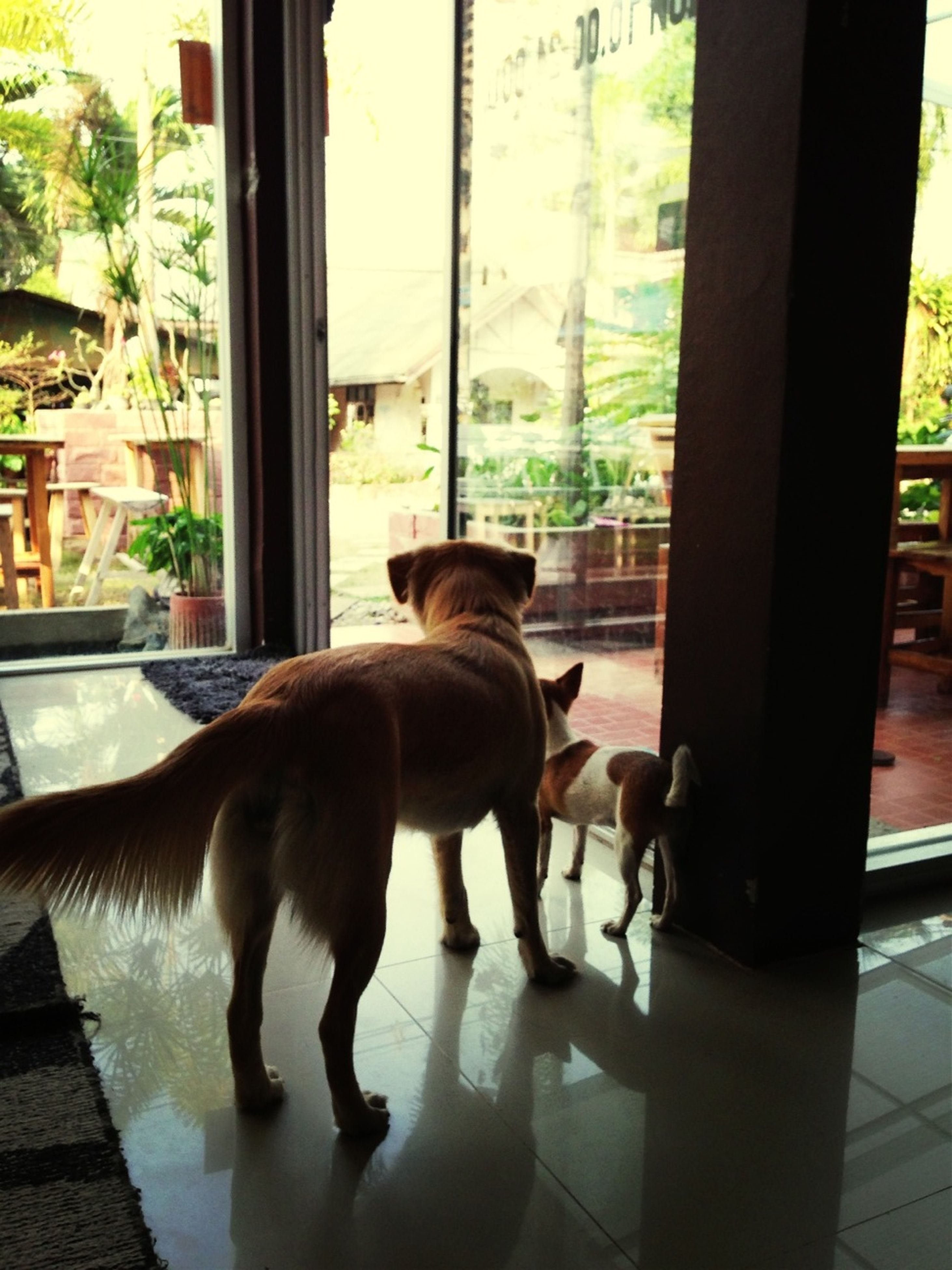 domestic animals, animal themes, indoors, pets, window, mammal, one animal, glass - material, transparent, window sill, dog, looking through window, home interior, table, reflection, sitting, domestic cat, full length, potted plant, day