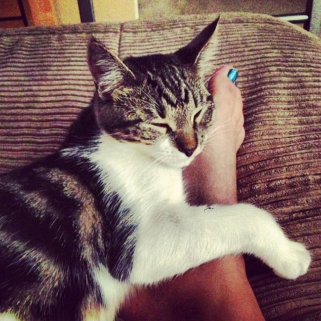 Kitty foot hug Kitty Hug Naptime Catwoman baby gucci love cutest summer instagood 2013 myboo @cats_of_instagram @catsofinstagram @kittensofinstagram @insta_kitten