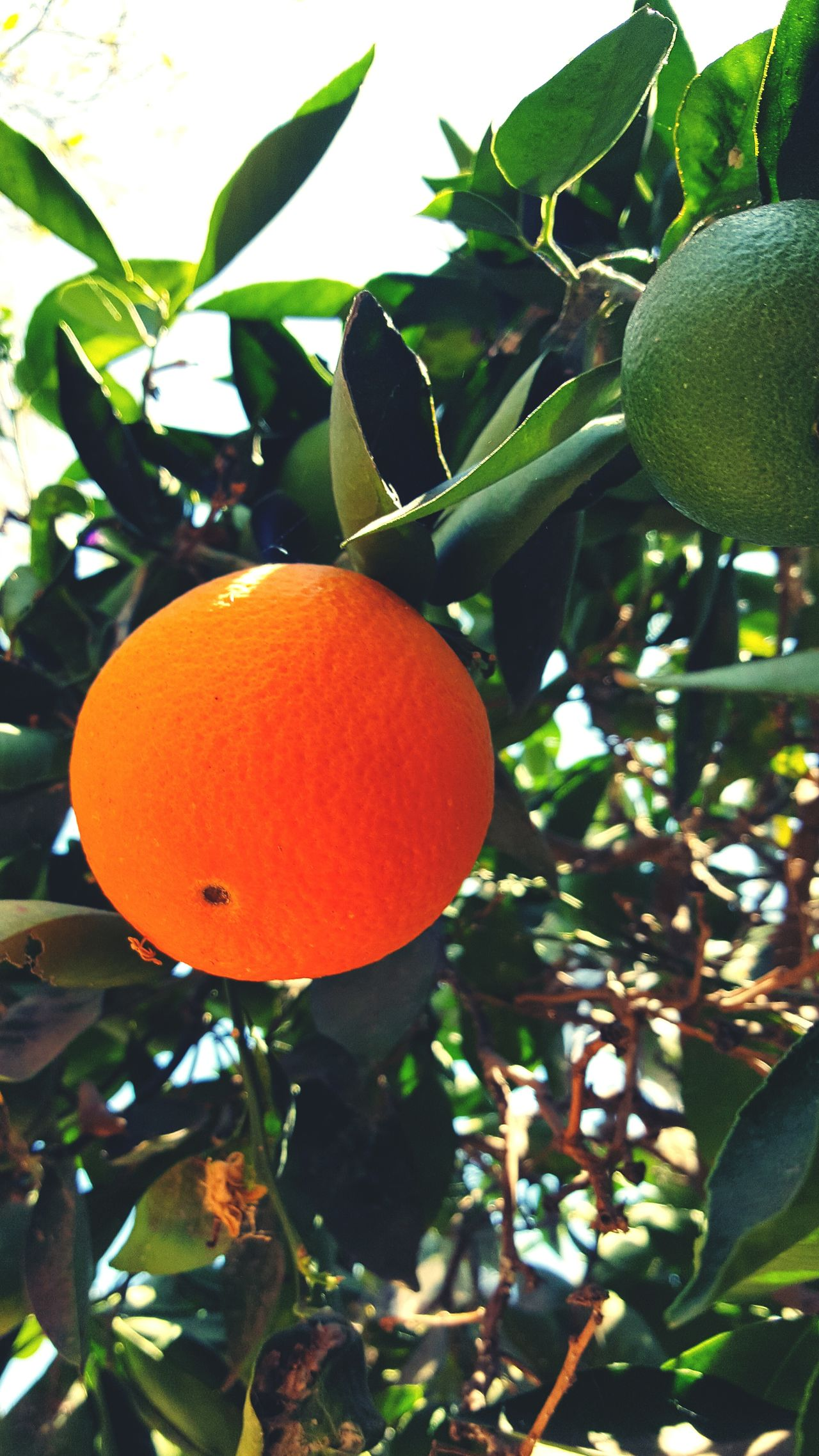 Colour Of Life Orange Fruit Tree Outdoor Photography Trees Color Palette
