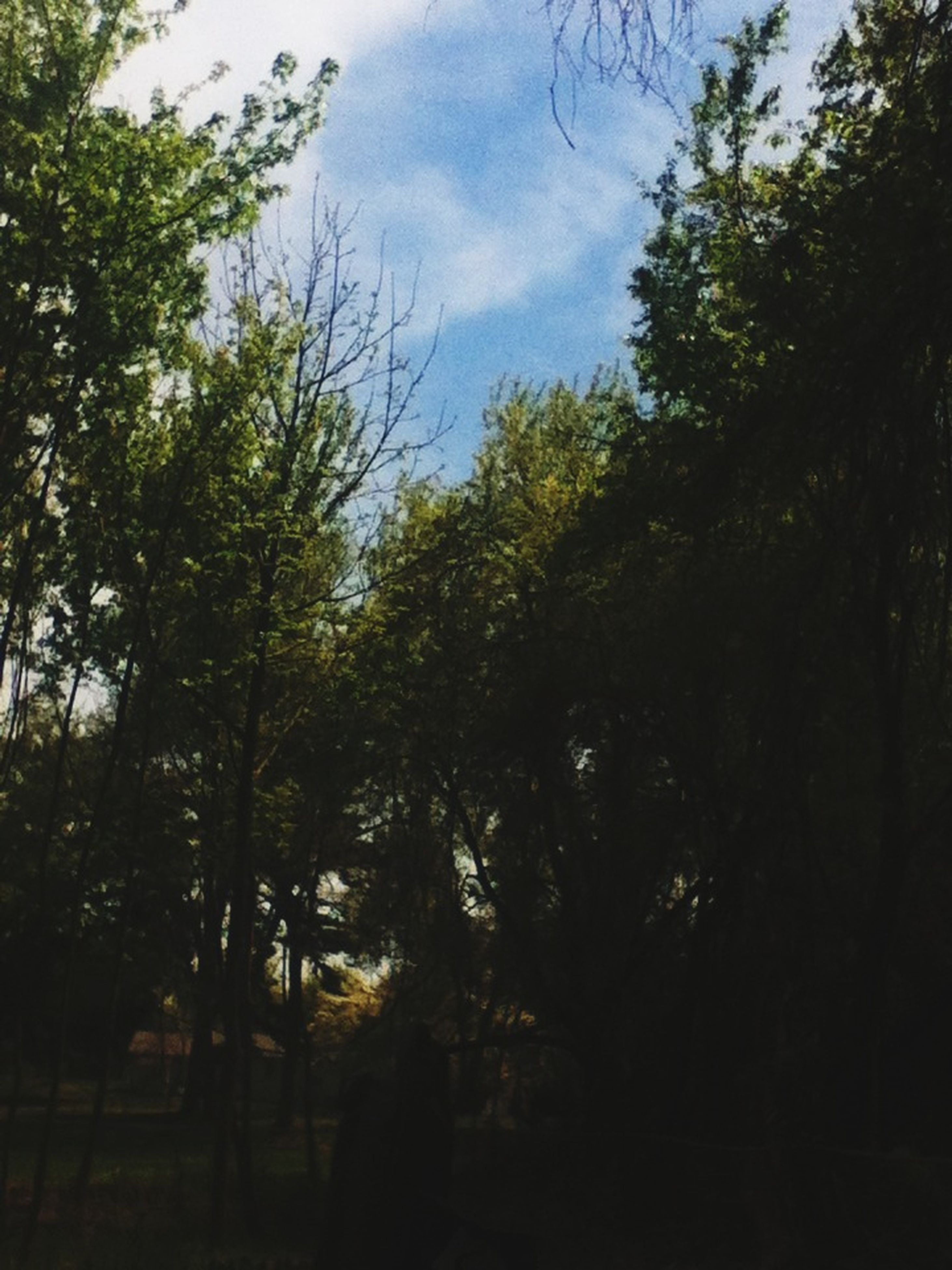 tree, sky, tranquility, growth, tranquil scene, silhouette, beauty in nature, nature, scenics, forest, low angle view, cloud - sky, branch, idyllic, cloud, outdoors, no people, cloudy, non-urban scene, day