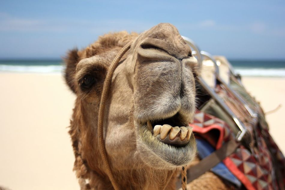 Beautiful stock photos of egypt, Animal Head, Animal Mouth, Animal Themes, Australia