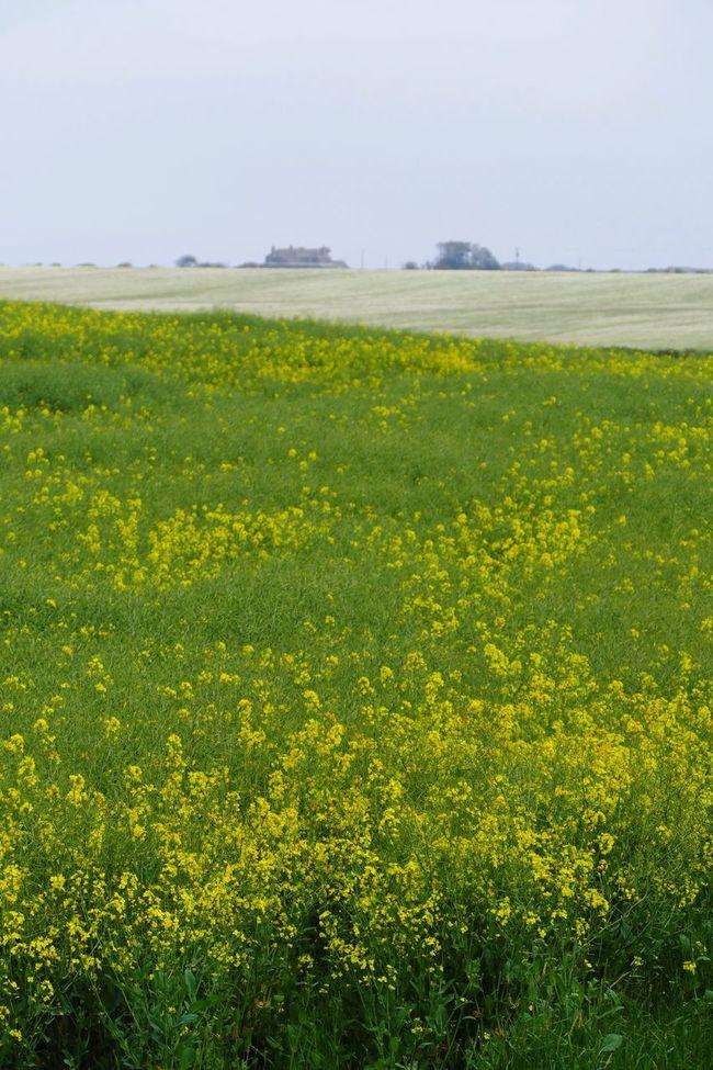 East Yorkshire Tunstall Landscape_photography Landscape_Collection Landscape LUMIX DMC FZ1000