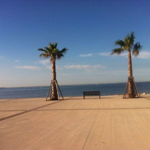 Réveil Soleil Padre Vacances holidays meze herault 34 palmiers etang de thau