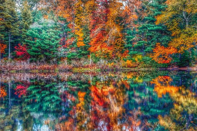 colors Colors Of Autumn Autumn Leaves Autumn Colors Autumn 2015 Autumn Collection Autumn Reflections Water Reflections Reflected Glory Reflection_collection Autumn Trees Trees Norwell, Massachusetts Massachusetts Massachusetts South Shore Southeastern Massachusetts Landscape Landscapes With WhiteWall Here Belongs To Me Water Reflection