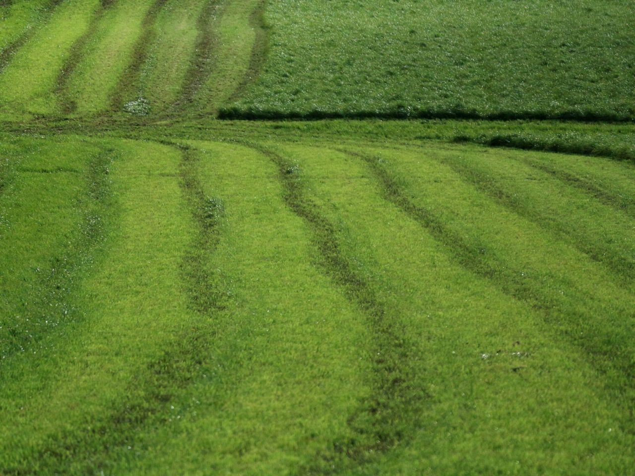 Green grass + Fields Grassfield Grassland Fodder Agricultural Land Slurry Lines Green Color Backgrounds Full Frame Nature Growth No People Beauty In Nature Outdoors Close-up Day Clonakilty  West Cork Wildatlanticway Ireland