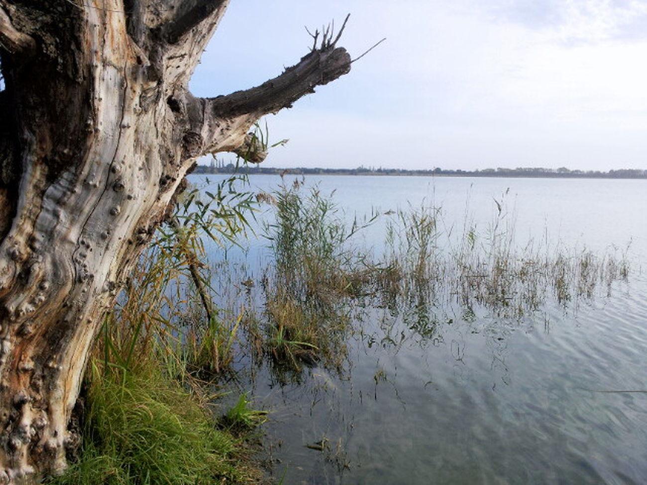 Etang des aulnes EyeEm Best Shots EyeEm Best Edits Landscape Naturelovers