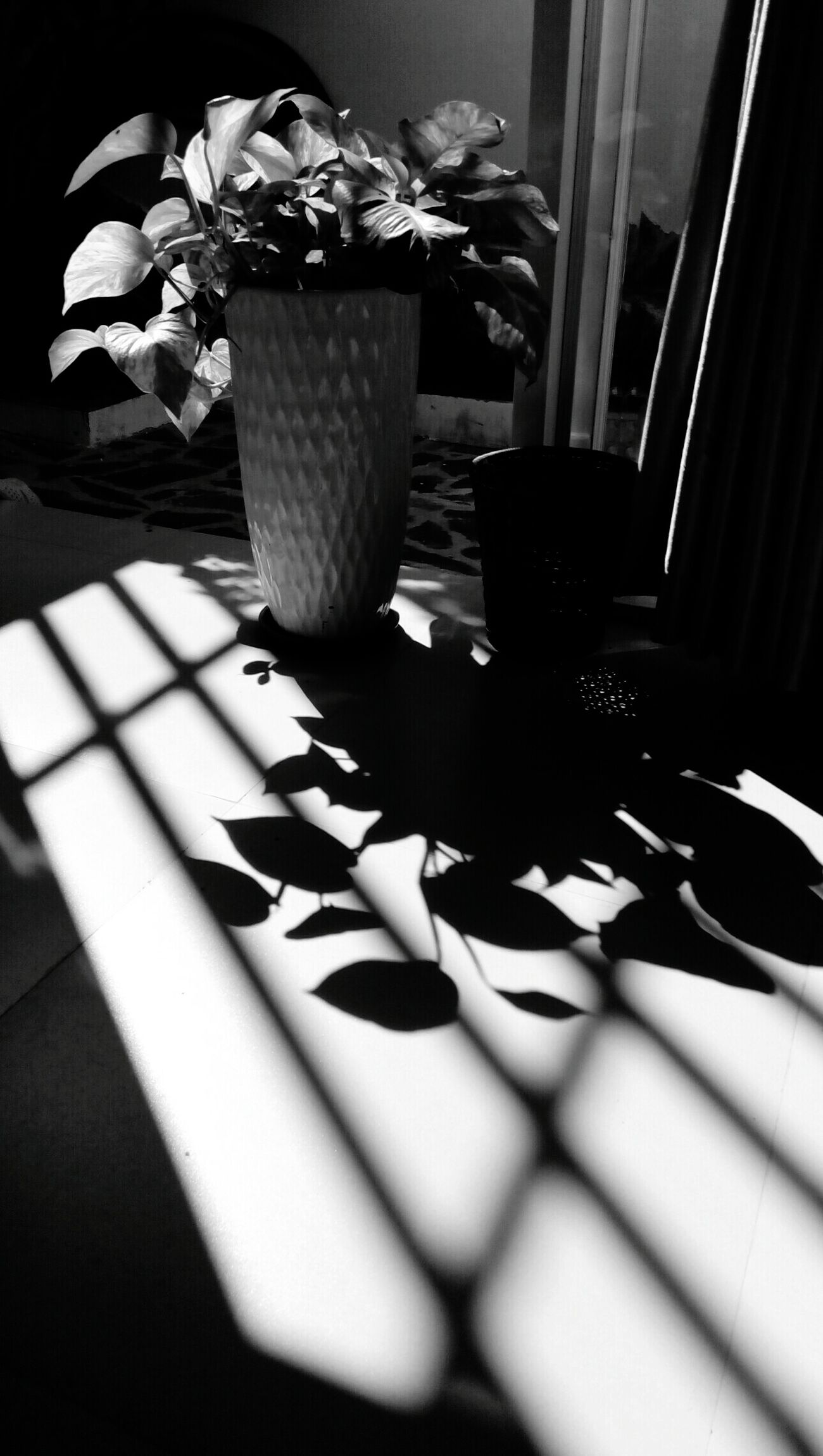 Shadow Sunlight Indoors  Plant And Light Shadow Plant B&w Photo B&W Collective B&W Street Photography Balck&white