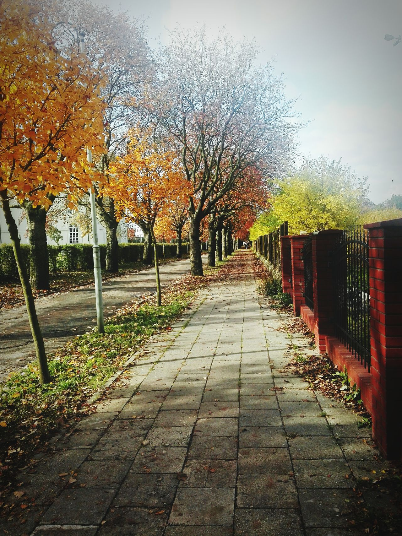 Polish Autumn Bydgoszcz Nature Beautiful First Eyeem Photo