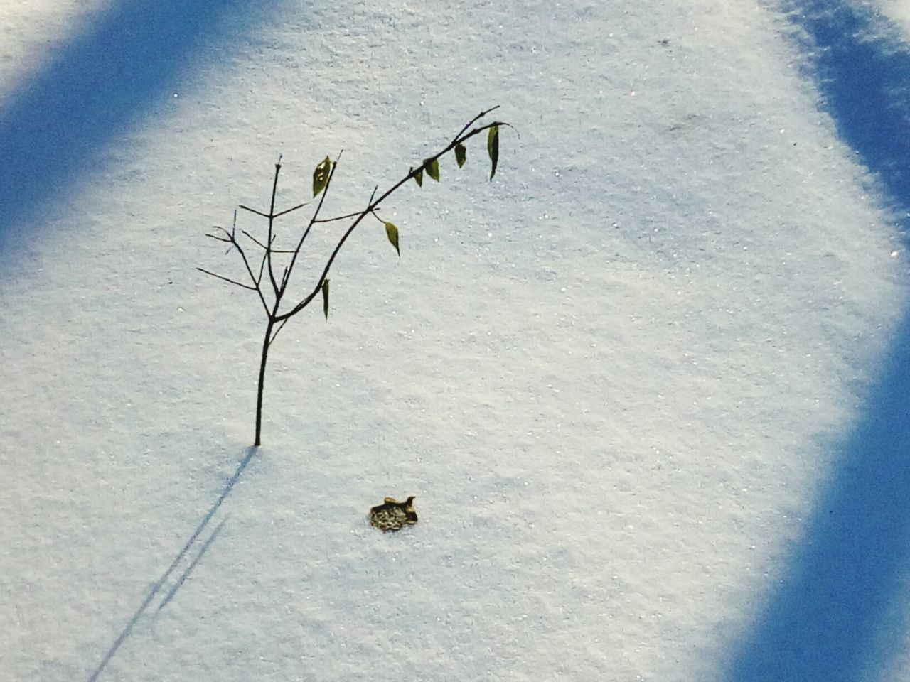 Nature Sand Plant No People Tranquility Close-up Day Outdoors Beauty In Nature Cold Temperature Tree Tranquility Forest EyeEm Nature Lover Beauty In Nature The Great Outdoors - 2016 EyeEm Awards Nature_collection Tranquil Scene Frozen Bare Tree Sunlight Plant Nature Winter Snow