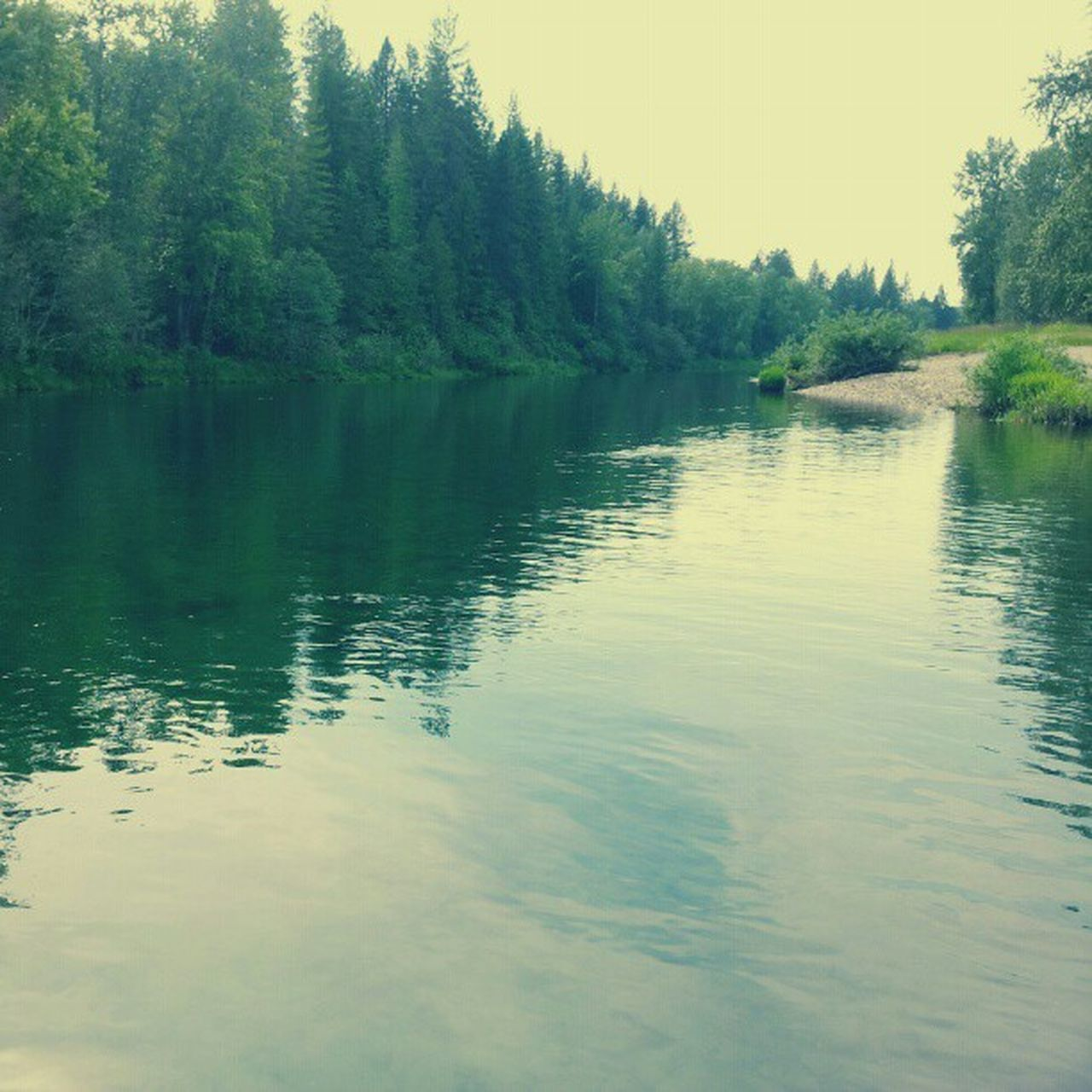 Floating Cdariver Summer