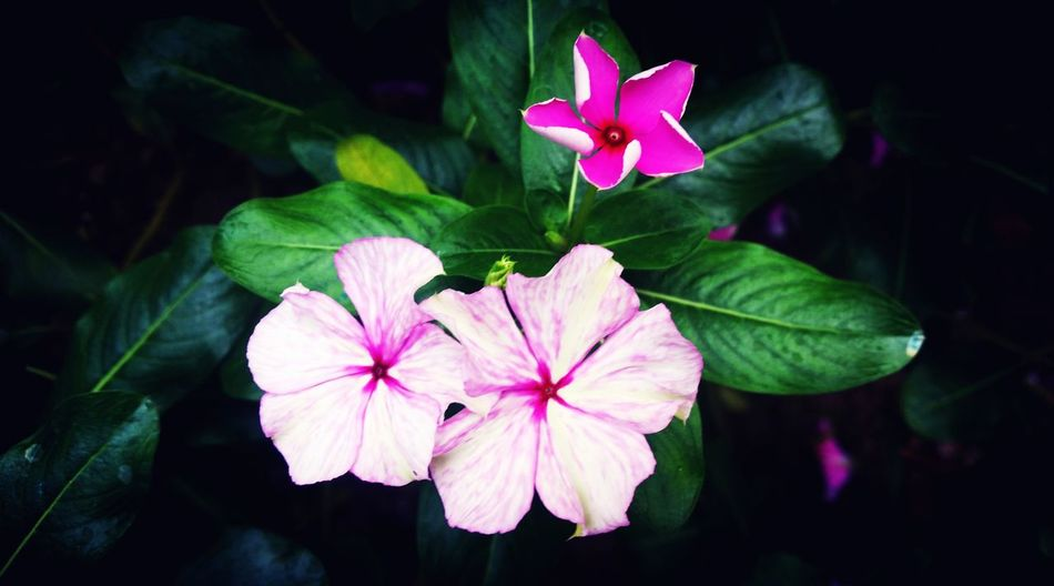 Girlysaturninophotography Flower Photography Nature Photography Flowers,Plants & Garden Flower Nature_collection Flowerlovers Eyem Philippines The Week Of Eyeem Eyeem Philippines