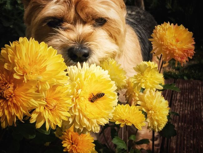 Flower Fragility Yellow Petal Freshness Beauty In Nature Flower Head Dog Nature Animal Themes One Animal No People Pets Domestic Animals Outdoors Day Mammal Growth Close-up Blooming