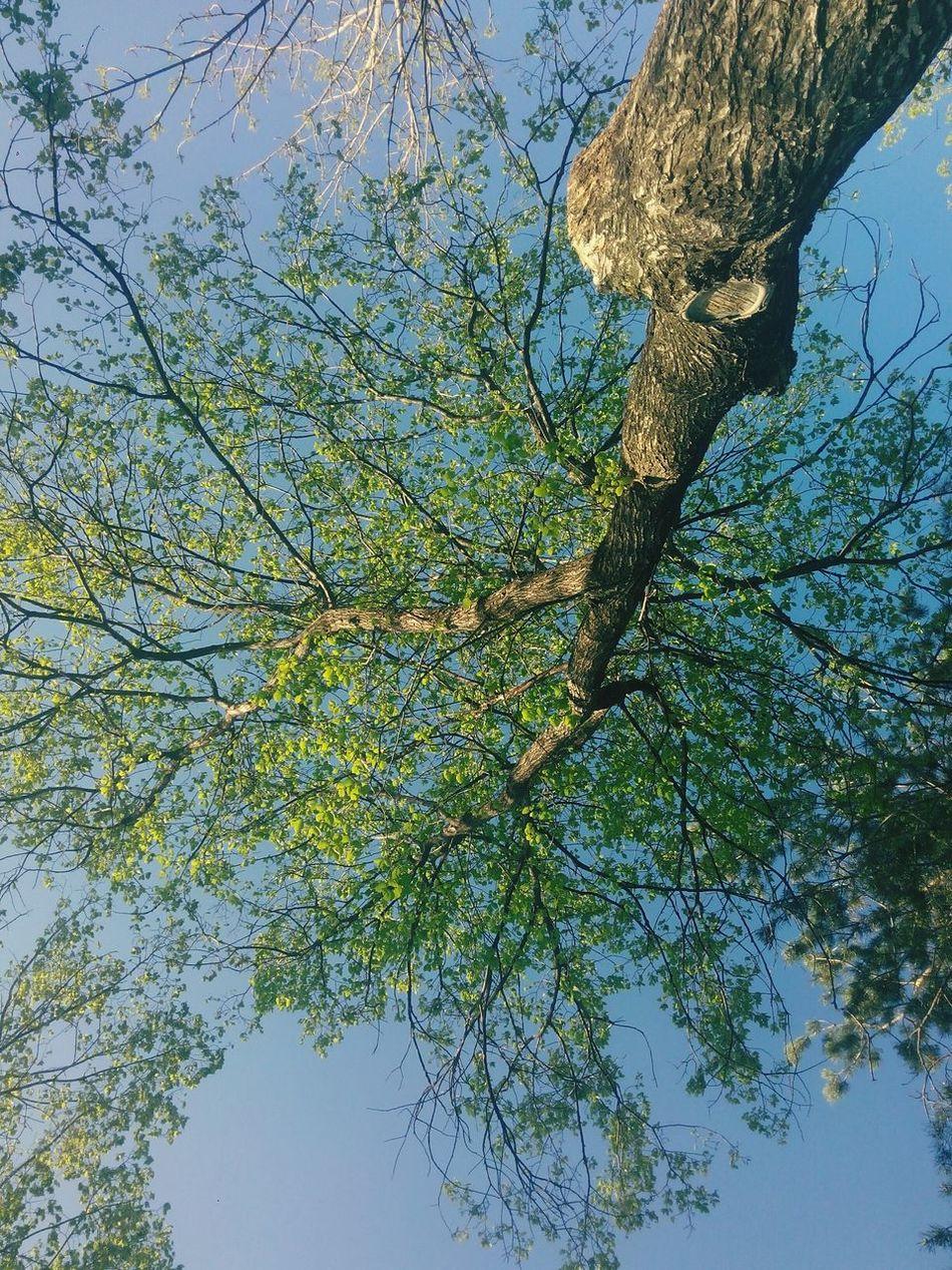 Rising high... Green Spring