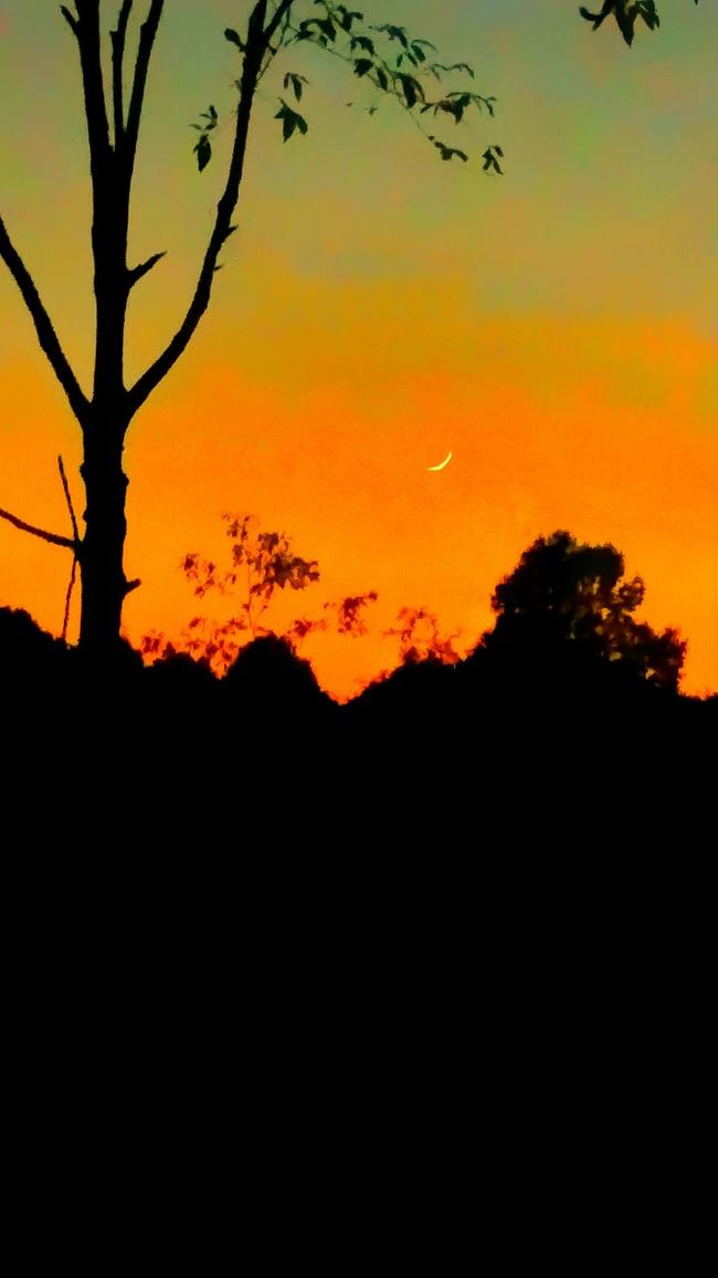 Sunset And Moom Sunset_collection Moon Landscape_photography Tree Dead Tree Focus On Background Focus On Foreground Tree With No Leaves Lonely Tree Orange Sky Dusk Moon At Dusk Little Bit Of Moon Sky_collection Goodbye Sun Hello Moon Tree Line Treescape