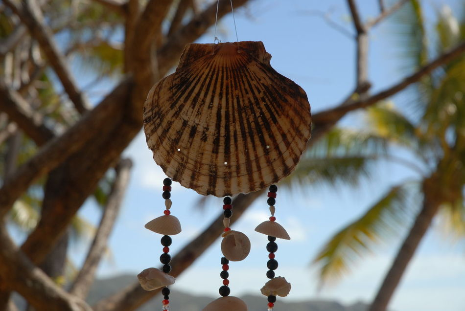 Wind chime hanging from a tree at Horseshoe Bay Close-up Day Focus On Foreground Hanging Leisure Time No People Outdoors Peaceful Relaxation Relaxing Shells Sky Time To Relax Tranquility Tree Tropical Holiday Wind Chime
