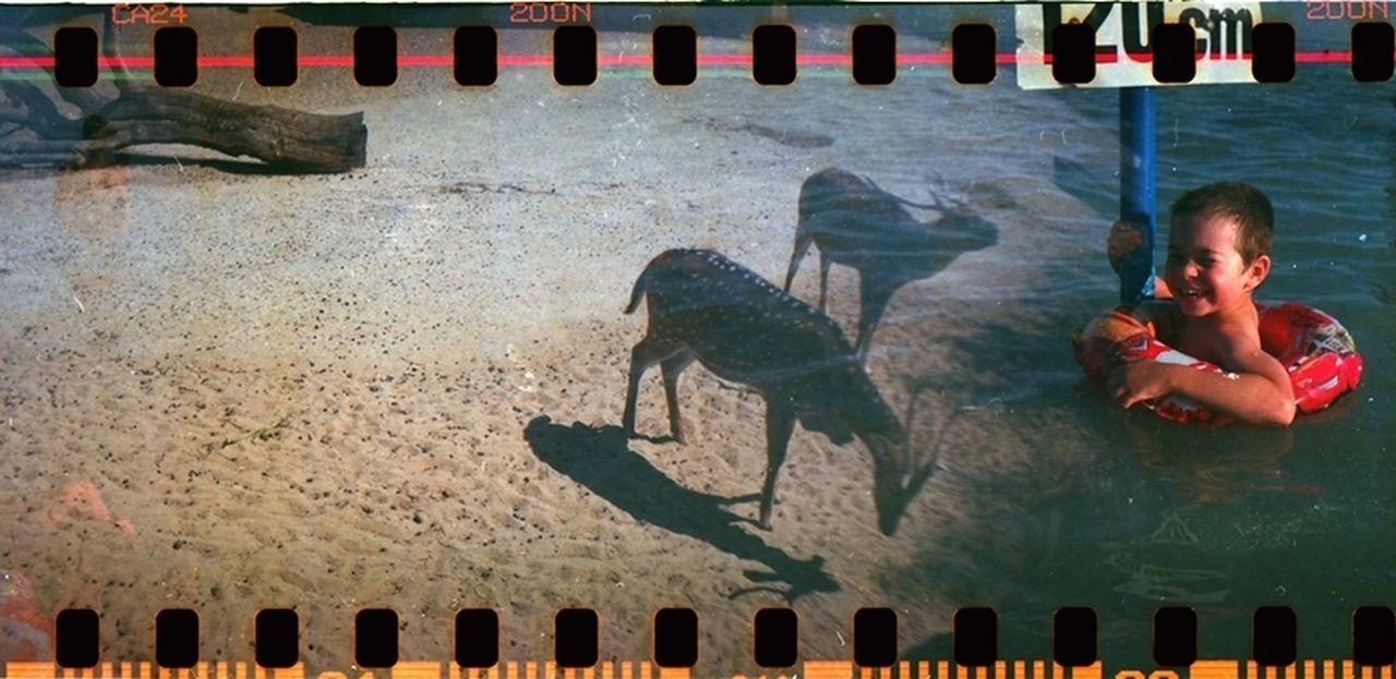 Animal Themes Animal Wildlife Double Exposure Kicsigaboka Lomography MySON♥ Sprocket Rocket Panorama Summer