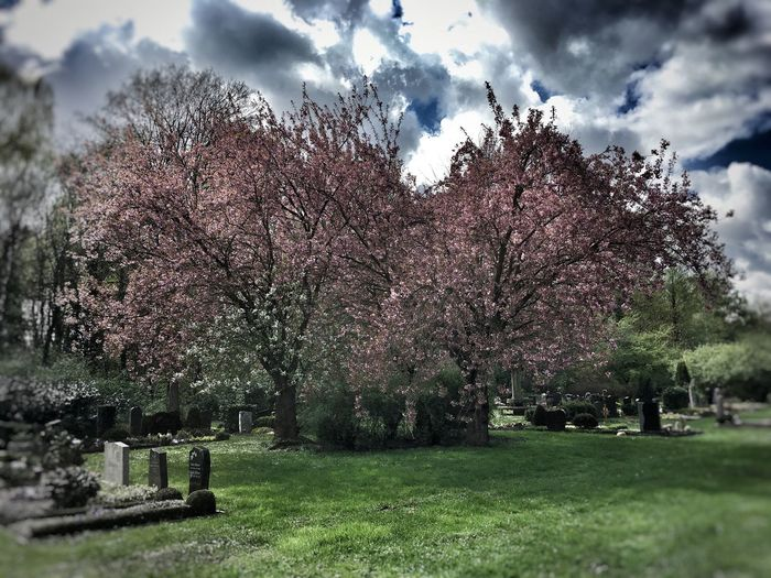 Tree Cemetery Tombstone Memorial Graveyard Tranquility Nature No People Outdoors Cloud - Sky Sky Beauty In Nature Growth Gravestone Long Goodbye