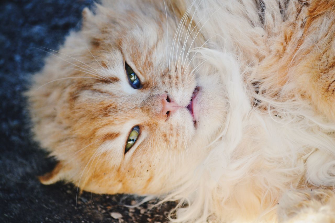 Funny cat Domestic Cat Pets Domestic Animals One Animal Feline Mammal Animal Themes No People Portrait Persian Cat  Close-up Day Furry Fluffy Pet Cat Domestic Animal Cute Funny Pet Life  Adorable