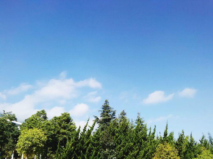 Trees Blue Sky Clouds And Sky