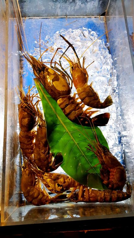 Fresh Catch Aqua Brown Color Of Life Color Palette Dead Food Fresh Fresh Catch Glass Ice Cubes Iced Leaf Prawns Ready To Cook Sea Animal Shell Tasty