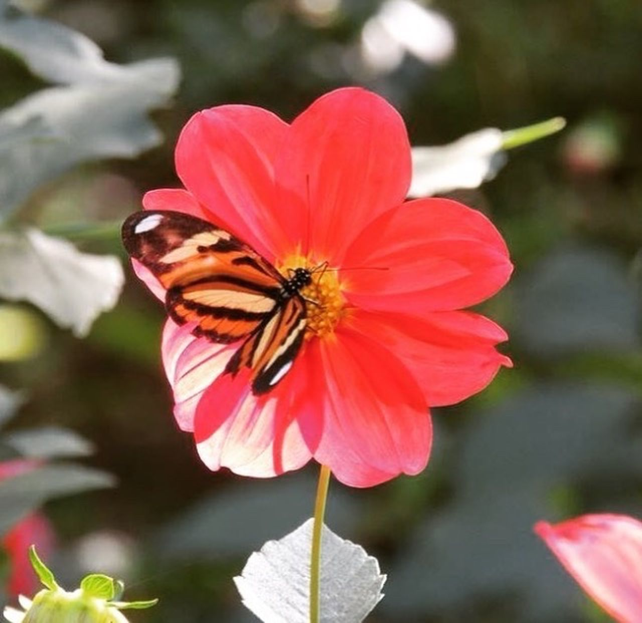 flower, fragility, petal, insect, one animal, nature, day, animal themes, focus on foreground, outdoors, freshness, growth, flower head, beauty in nature, animals in the wild, close-up, plant, pink color, no people, animal wildlife
