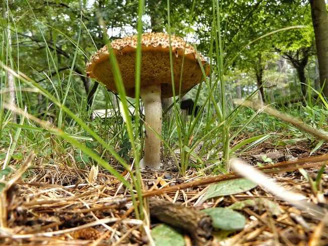 Bright Colour Of Life Outside Outdoors Greenery Nature Grass Green Earth Fungi Growth Fungi Toadstool Toadstools Mushrooms Mushroom_pictures Mushrooms 🍄🍄 Close Up Shroom Shroomery Shroomporn