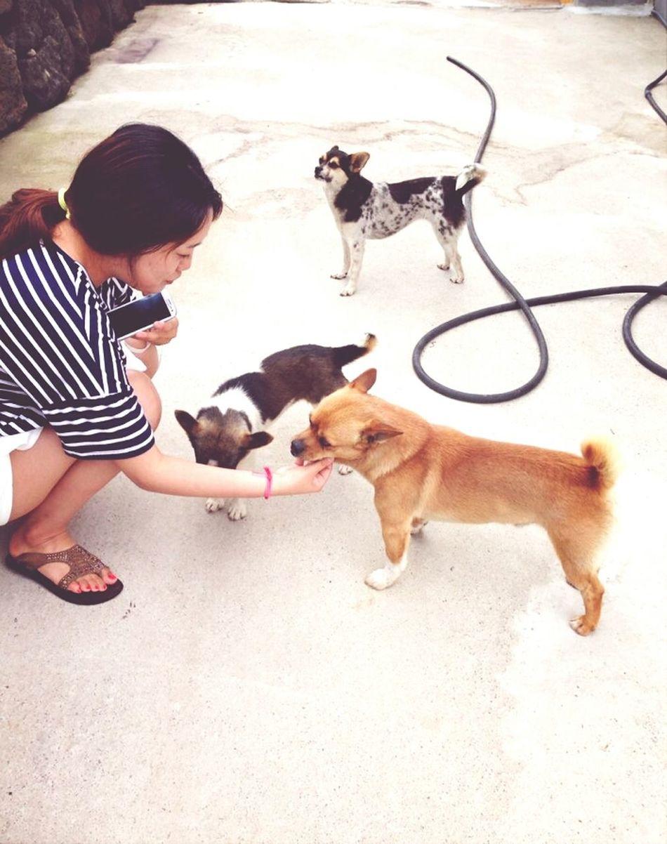 제주도에 1대2대3대가 같이사는 개가족. 누가 엄마고 누가 할머니인진 모르겠지만 말도 잘 듣는다 아고 이뿌라~ JEJU ISLAND  The Dog Family Dogs