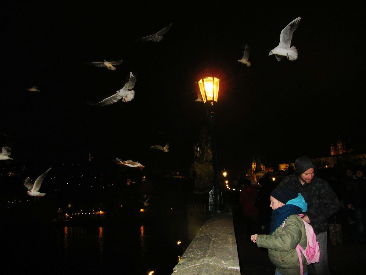 Feeding Seagulls Charles Bridge Prague Prague Czech Republic Birds Children Old-fashioned Lamppost Bridge Wall Medieval Bridge River Lights Reflections In The Water The City Light