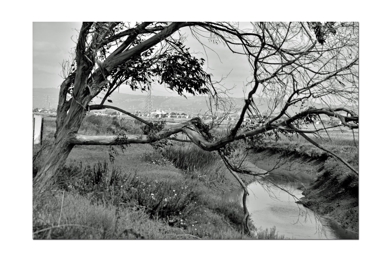 Hayward Regional Shoreline Park 3 Hayward, Ca. Tidal Wetlands Restored Marsh Saltmarshes Former Salt Ponds Migratory Route Waterfowl Nature Grasslands Water Channels Streams Creeks Ponds Birds San Francisco Bay Trail Monochrome Black & White Black And White Black And White Photography Landscape Black And White Collection  Landscape_lovers Landscape_Collection Landscape_photography