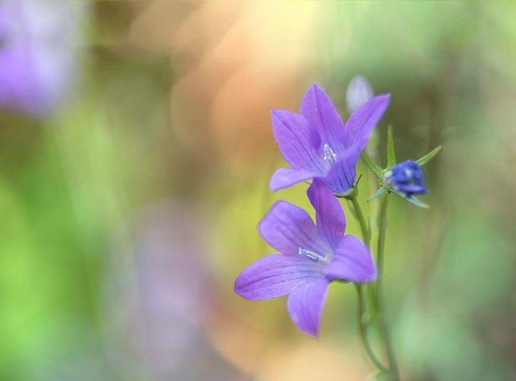 Flower Nature Beauty In Nature Growth Fragility Purple Plant Petal Freshness No People Outdoors Blooming Close-up Day Flower Head