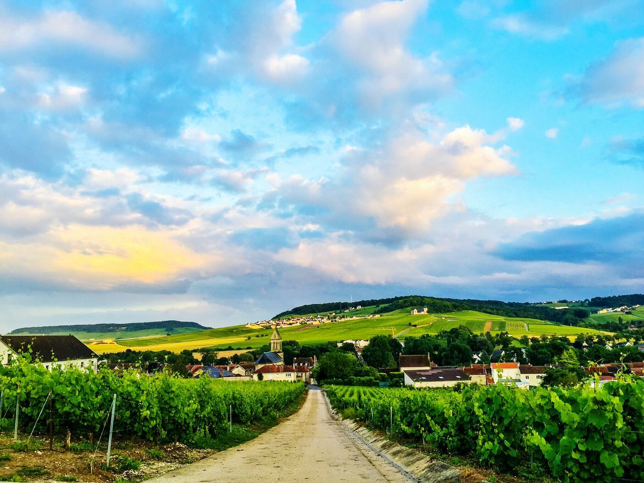 Champagne Region No People Champagne Nopeople Blue Sky And Clouds Champagne Grapes Green Grapes Wine GrapesWine GrapesWine Grapes France Village View Wine Nature_collection EyeEm Nature Lover Nature Photography Vivelafrance Field Feldweg Showcase July