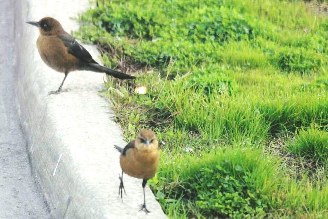 Taking Photos Birds Birds Of EyeEm  Bird Watching