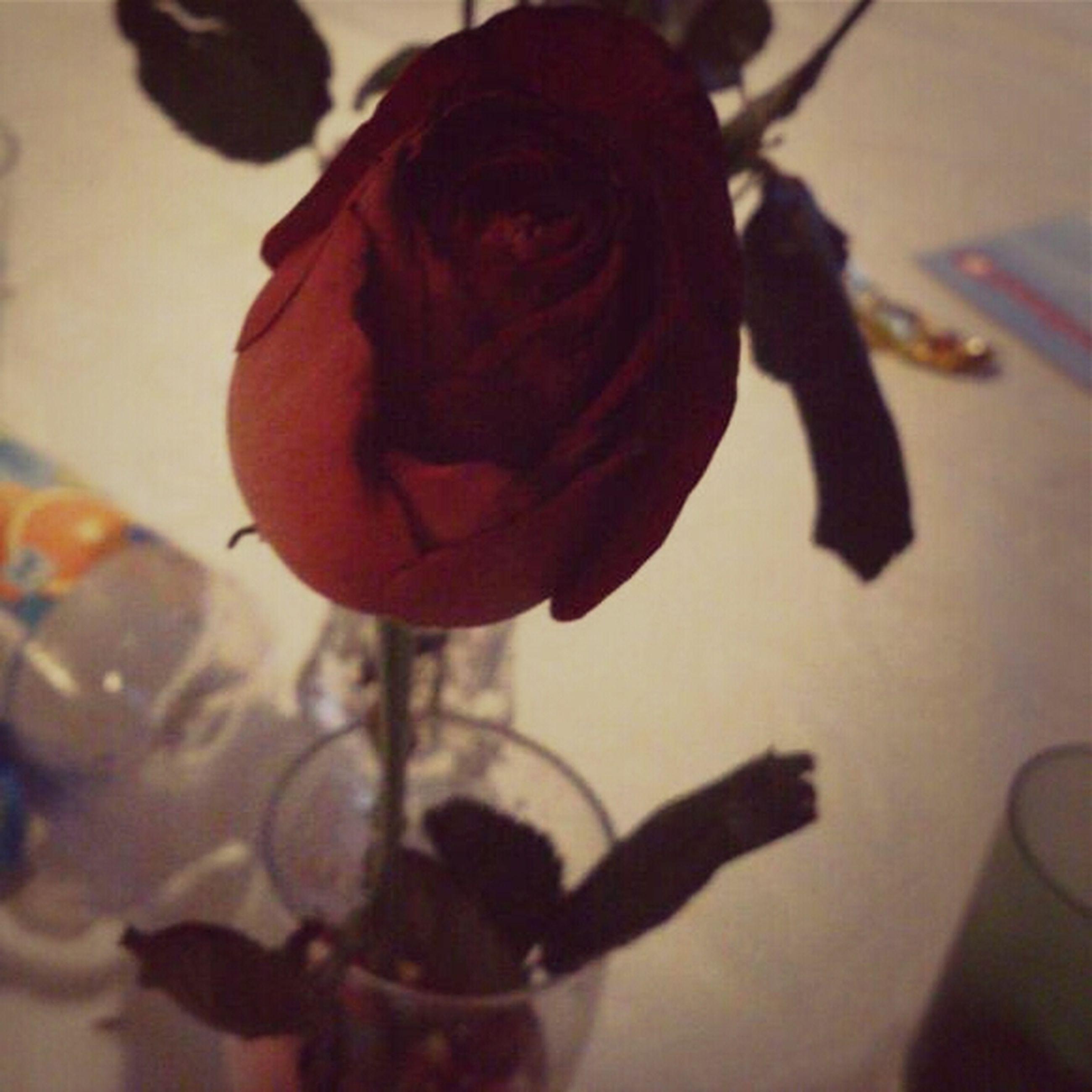 flower, rose - flower, indoors, petal, freshness, close-up, fragility, flower head, rose, focus on foreground, red, single flower, vase, pink color, home interior, no people, nature, table, plant, stem