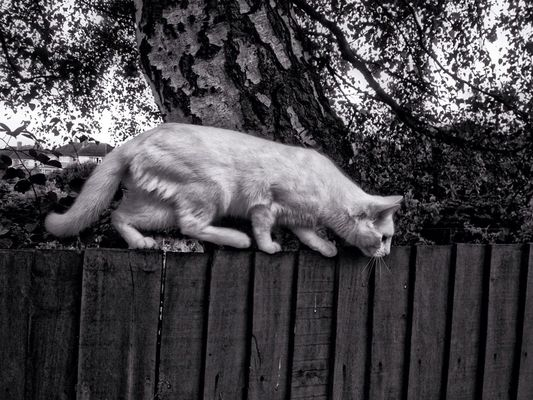 cat in Royal Tunbridge Wells by Kevin Richter