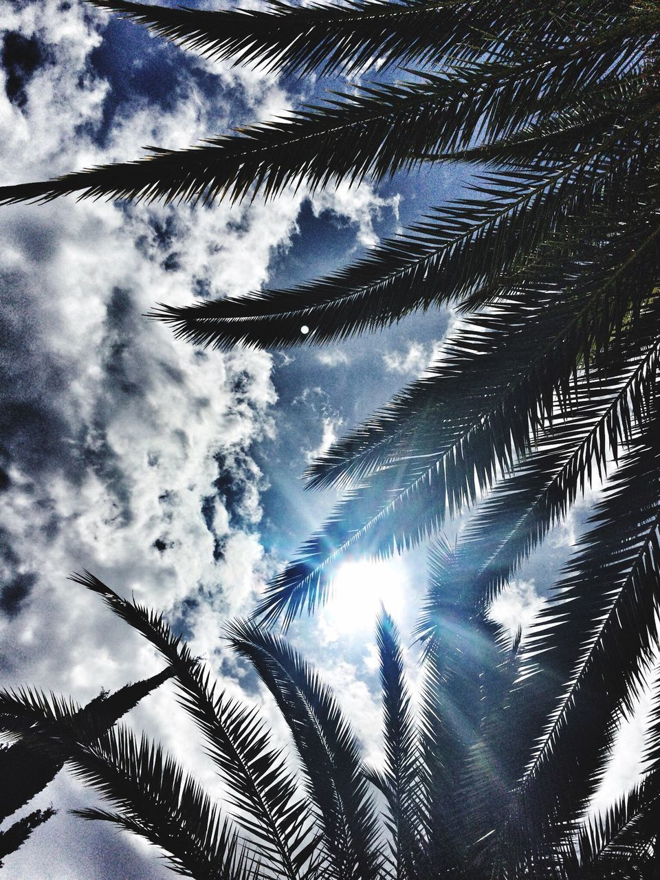 low angle view, nature, beauty in nature, growth, palm tree, sky, tranquility, no people, day, outdoors, scenics, tree