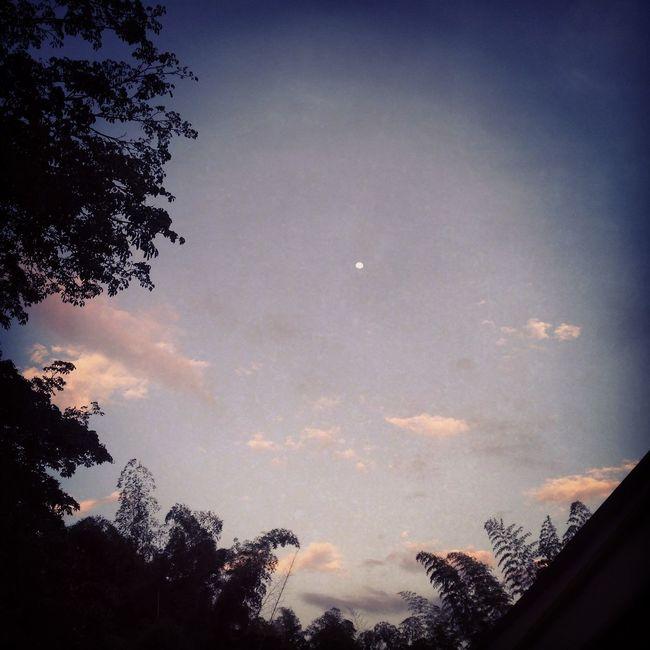 Ella She Moon Luna Trees Arboles Cielo Sky
