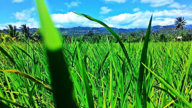 Check This Out Green Fields Enjoying The Sun Beautiful World Beautiful Nature EyeEm Nature Lover Peace And Quiet 📷by:Me😁