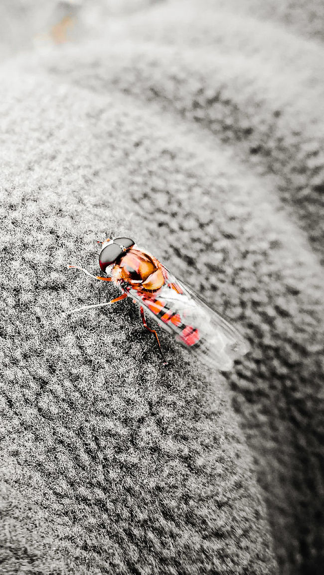Insect Photography Insects Beautiful Nature Focus On Foreground Nature Beauty In Nature Wasps. Close Up Nature Close Up Photography Newcastleupontyne Colorsplash Playing With Pictures. On My Arm Insect Photo