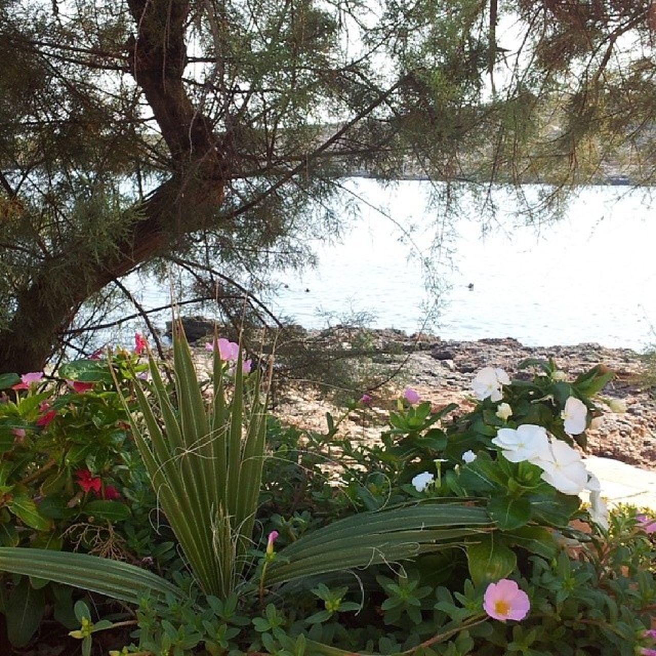 Visitcomino Flower Flowergarden