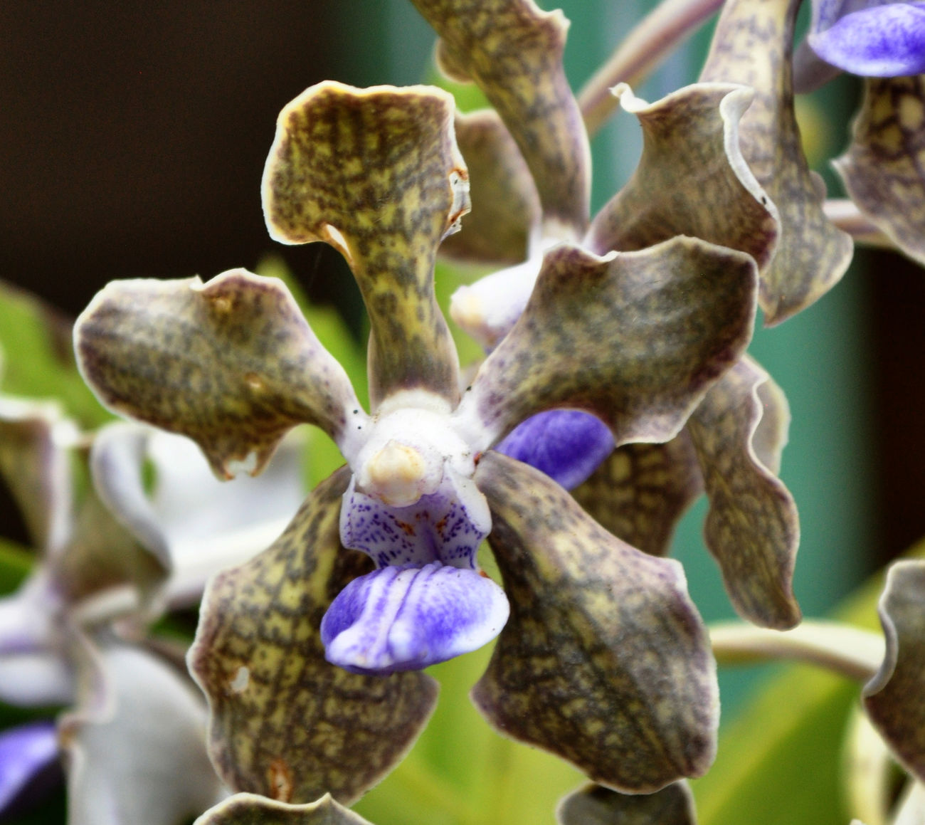 Flower Garden Photography Orchid Blossoms Orchids Collection Tropical Plants