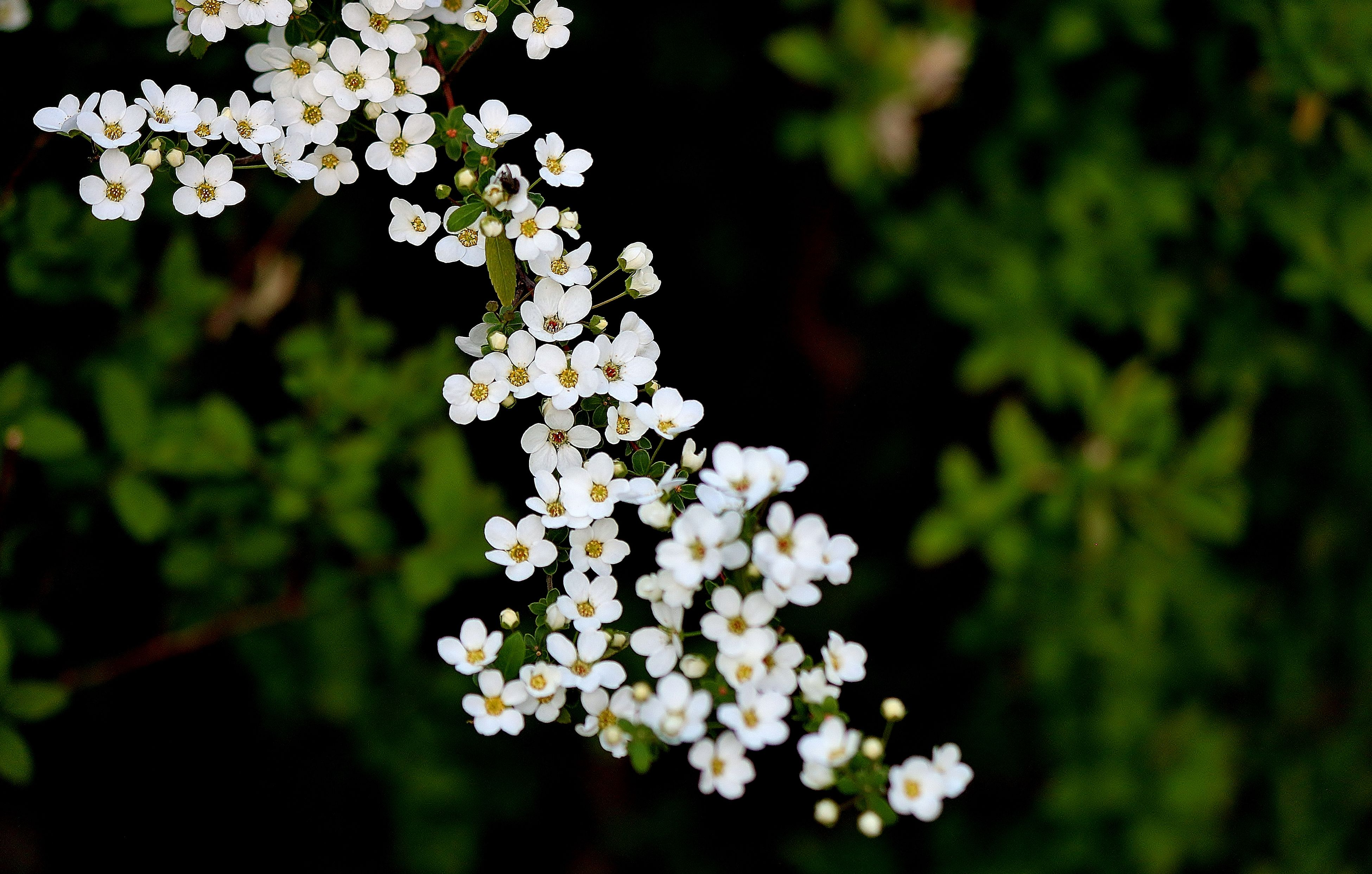 flower, growth, freshness, white color, fragility, focus on foreground, petal, beauty in nature, close-up, nature, blooming, flower head, plant, selective focus, blossom, outdoors, in bloom, park - man made space, day, white