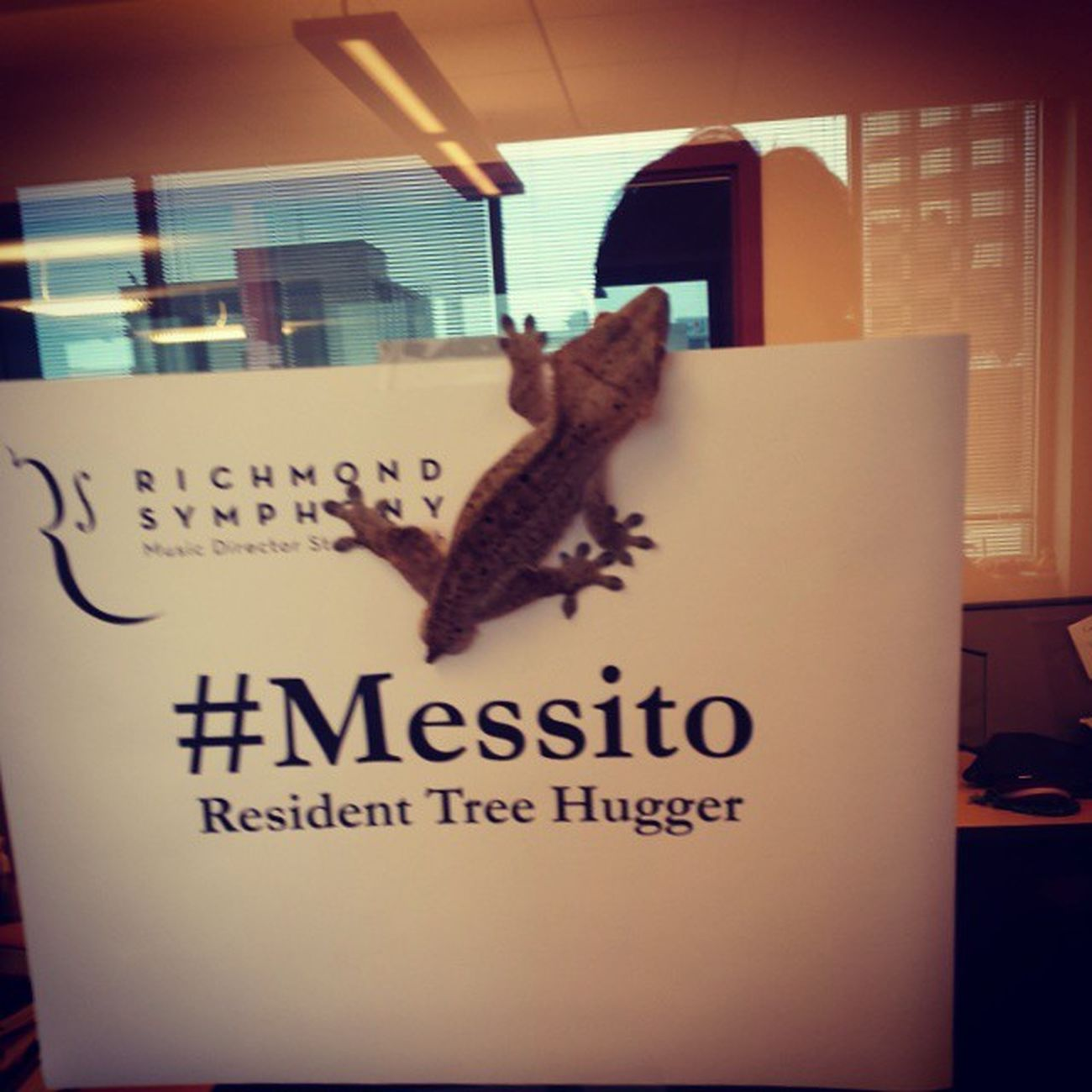 Messito first day at work. Doing paperwork, filling out tax documents, signing up for insurance, getting a business card and decorating office. CrestedGecko RichmondSymphony VirginiaHumidityIsGoodForMySkin TreeHugger