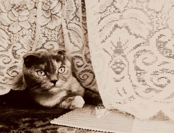 Her name is Gretta. Despite his aristocratic appearance, she is incredibly gentle and kind. Cat Cat♡ Aristocats Aristocrat Sepia Sepia_collection Character Cat Of Eeyem One Animal Domestic Cat Portrait