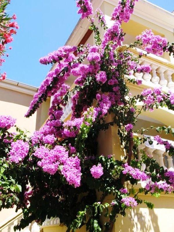 Dugiotok Flowers