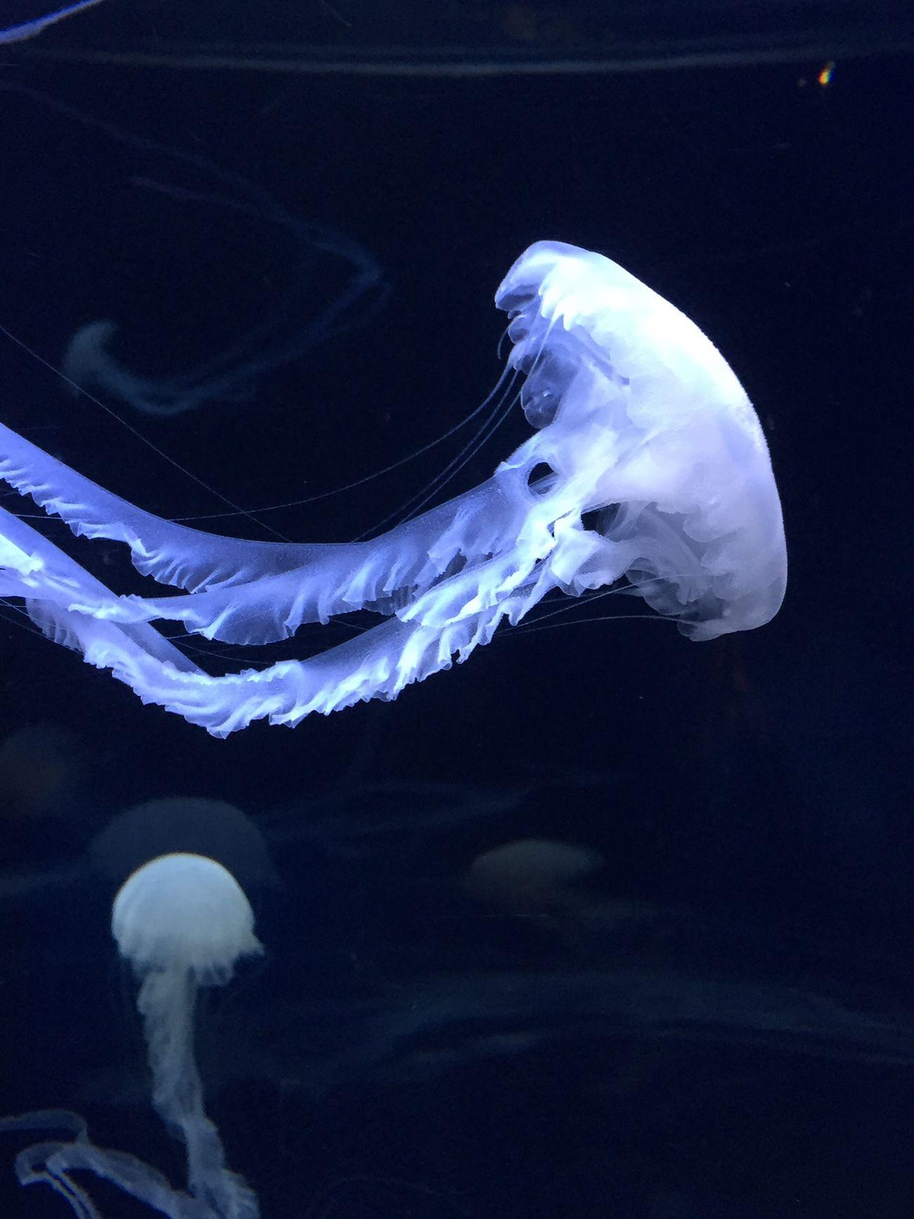 Aquarium クラゲ Water_collection Jellyfish Landscape_Collection Taking Photos Microcosm Relaxing Aquarium