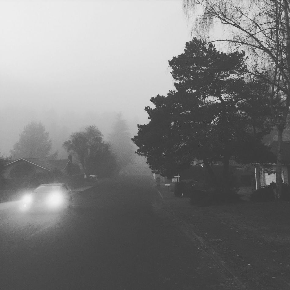 Fog Road Foggy Foggy Morning Autumn Winter Blackandwhite Blackandwhite Photography Drive Moody Suburbia Portland Pacific Northwest  Oregon Cold October November December January Weather Transportation No People Street Photography