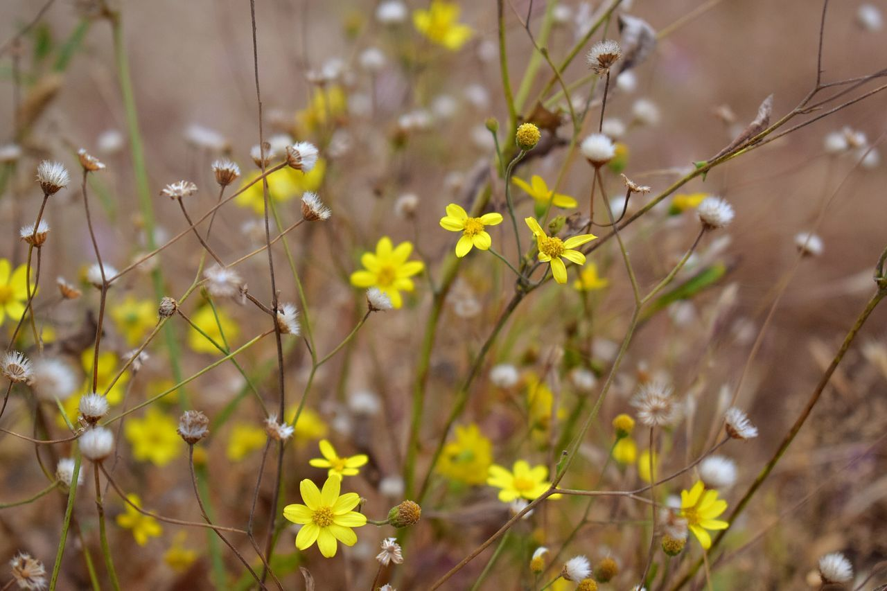 Flowers. . Nature Plant Flower Growth Beauty In Nature No People Outdoors Close-up Day Freshness Nikonindiaofficial NikonD3300📷 EyeEmBestPics EyeEm Best Shots Beauty In Nature Nikon The Week On EyeEem Mountains And Sky Drygrass Sky Grass Landscape Yellow Flower Yellow White