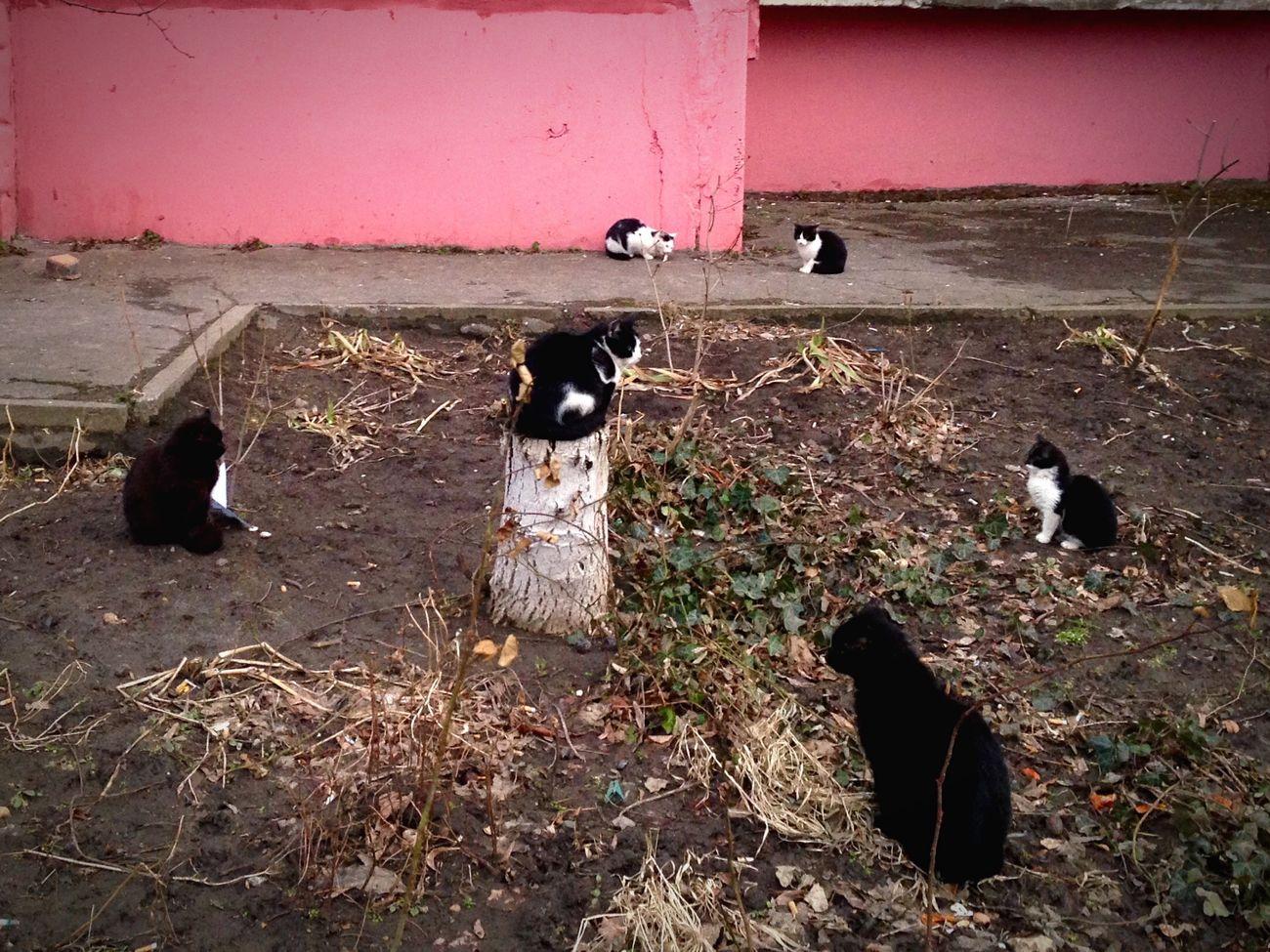 Homeless Cats Cat Lovers Cat♡ Cats Cat Коты котэ кот
