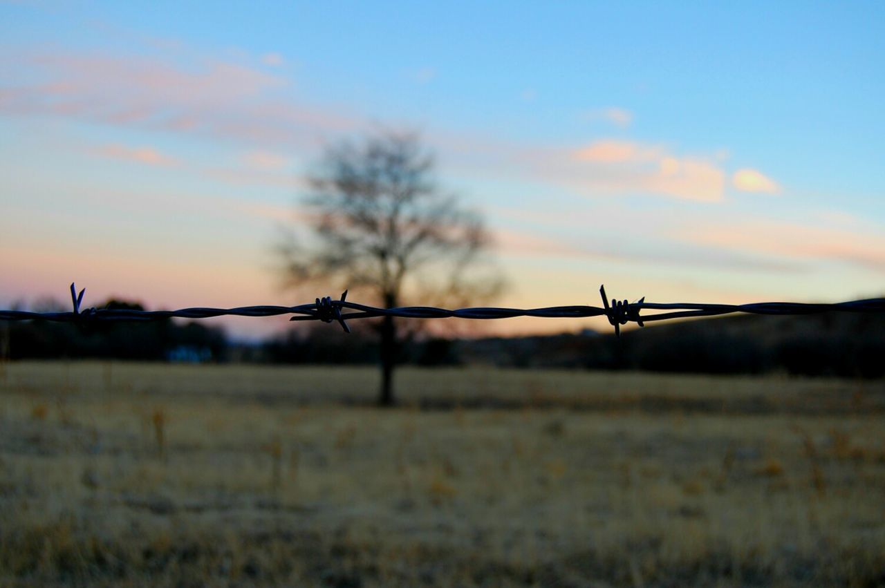 Barbed Wire Fence Forbidden Dramatic Sky Outdoors Sky Day No People Nature Hike Hiking Colorado Close-up Greettheoutdoors Optoutside Near Focus Beauty In Nature Cloud - Sky Landscape Focus On Foreground Tree Out Of Focus One Tree Pastel Power Pastel Sky